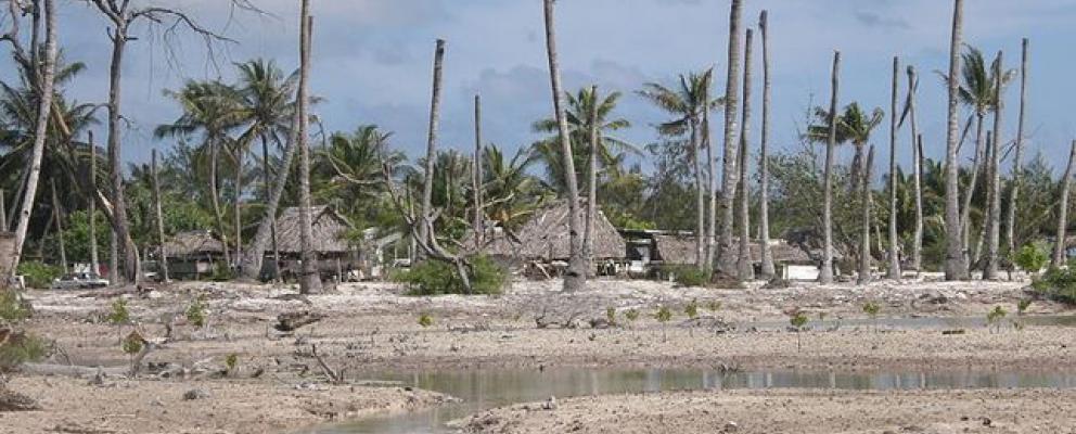 Impacto de la erosión costera y sequía en cocoteros en Eita, Tarawa, Kiribati